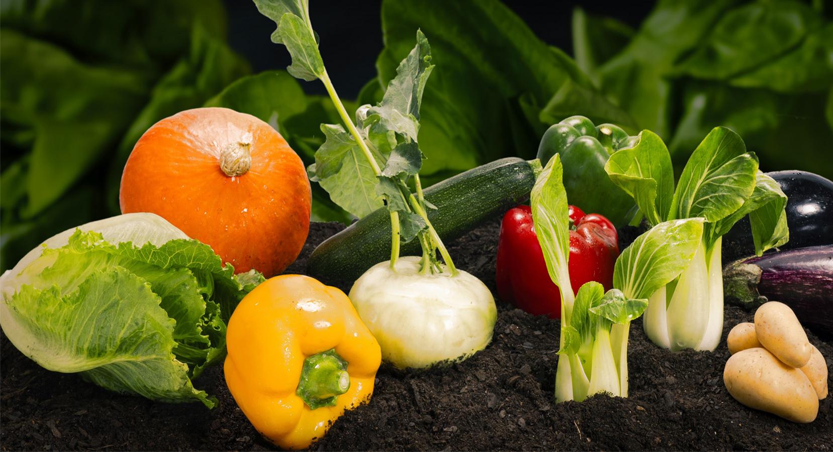 Hortalizas y Verduras de Temporada 2-slider-2.jpg